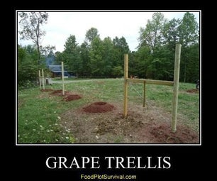 Wildlife Grape Trellis