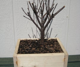 Starting a Bonsai