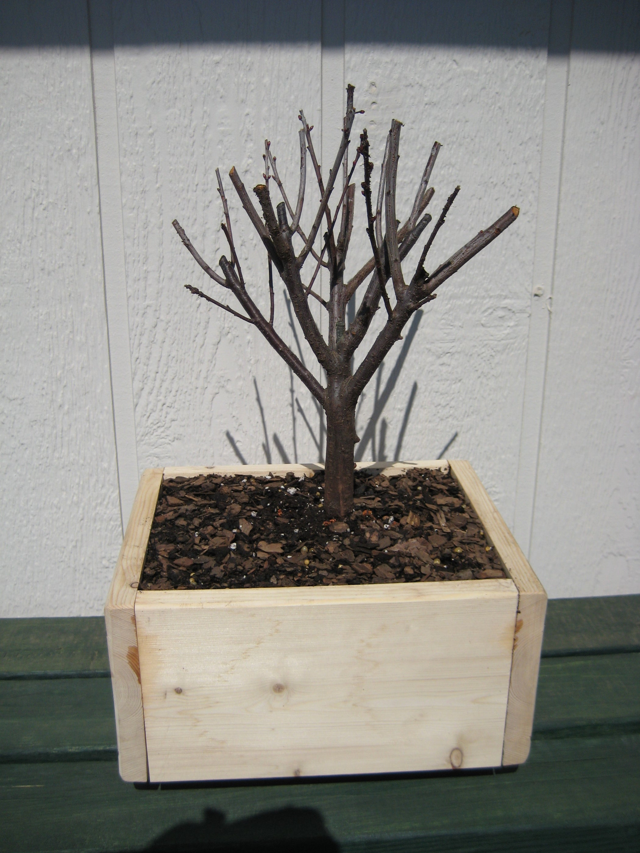 Groovy Starting A Bonsai 9 Steps With Pictures Wiring Digital Resources Funapmognl