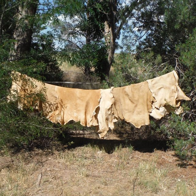 Picture of Finished Buckskin