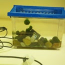 DIY marimo ball habitat tank!