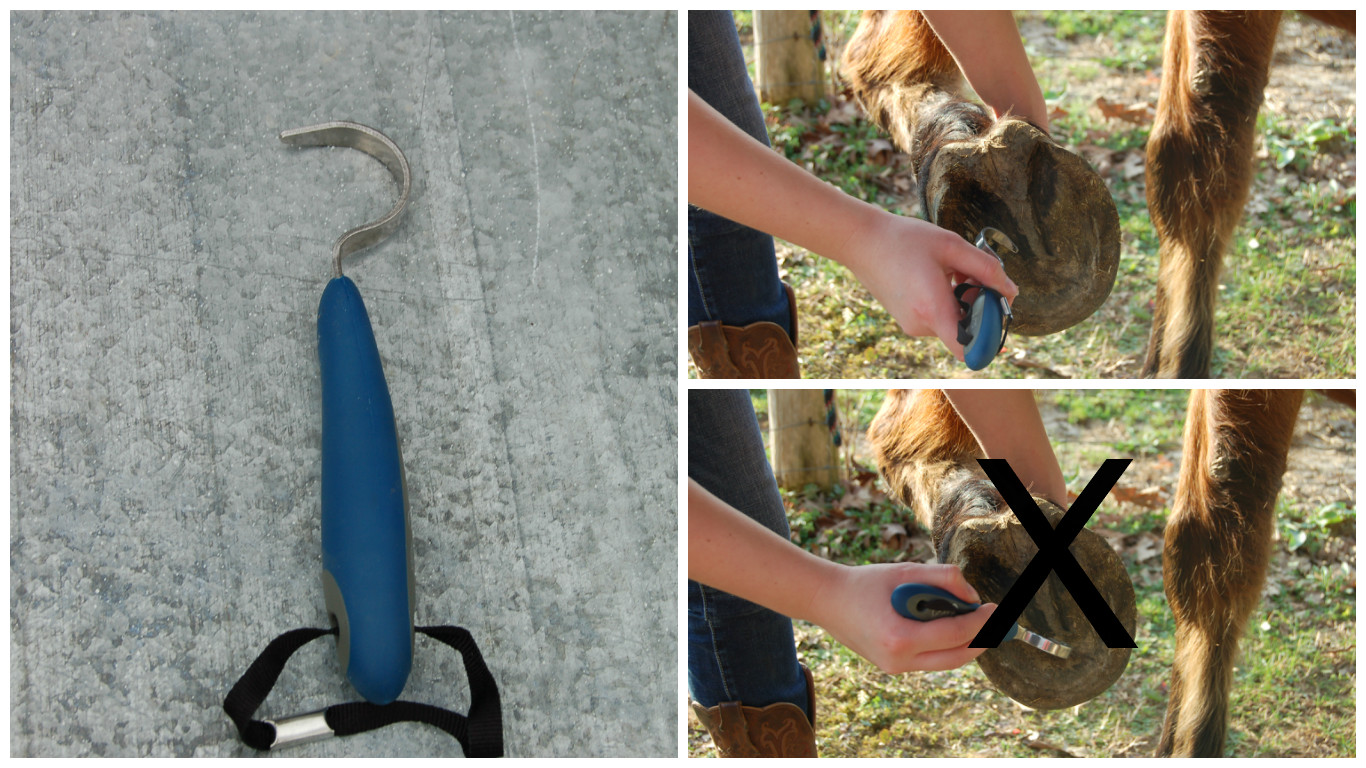 Picture of Use a Hoofpick to Clean Your Horse's Hooves