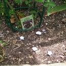 Green Snail Pellets