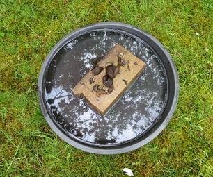 Teaching Birds to Eat Invasive Slugs/ a Poison Free Slug Killer