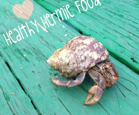 How to spoil your hermit crabs: Food Edition