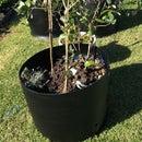 Portable Tree Planter