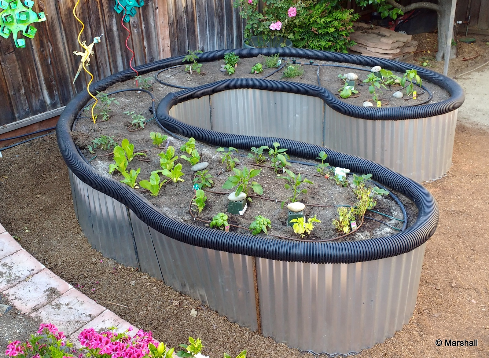 Picture of The Hard Part, Waiting for the Vegetables to Grow