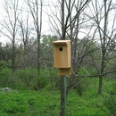 Eastern Bluebird Houses (from hand tools)