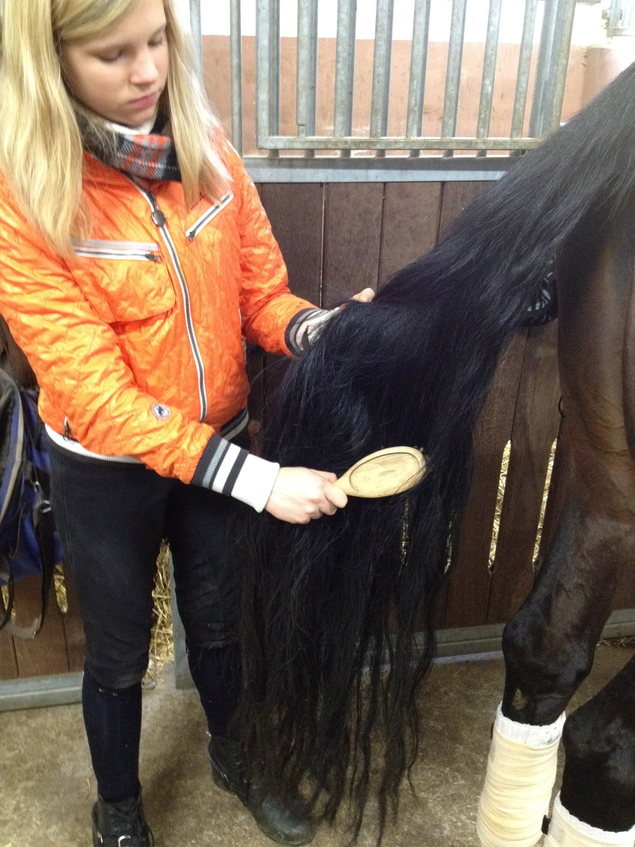 Picture of Grooming the Horses Mane and Tail