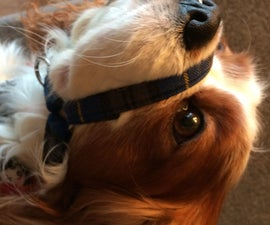 Head Halter for Dogs