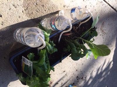 Inexpensive Self-watering Garden