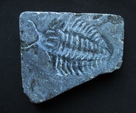 0,00001 year old fossil