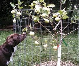 Grafting a Multi-variety Apple Tree.
