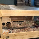 How to Make a Two Level Guinea Pig Cage