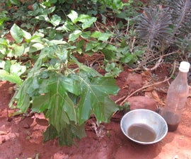 Home-made Organic Ant Repellent