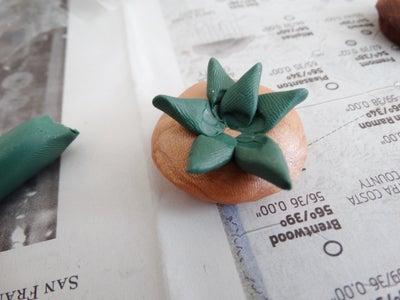 Create Succulents