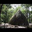 How to Build Grass Hut