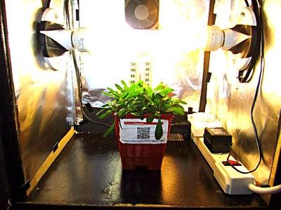 Grow Box  -  Novice / Entry Level