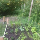 Getting Started Square Foot Gardening