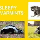 PUT YOUR VARMINTS TO SLEEP!
