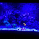 aquariumguy98