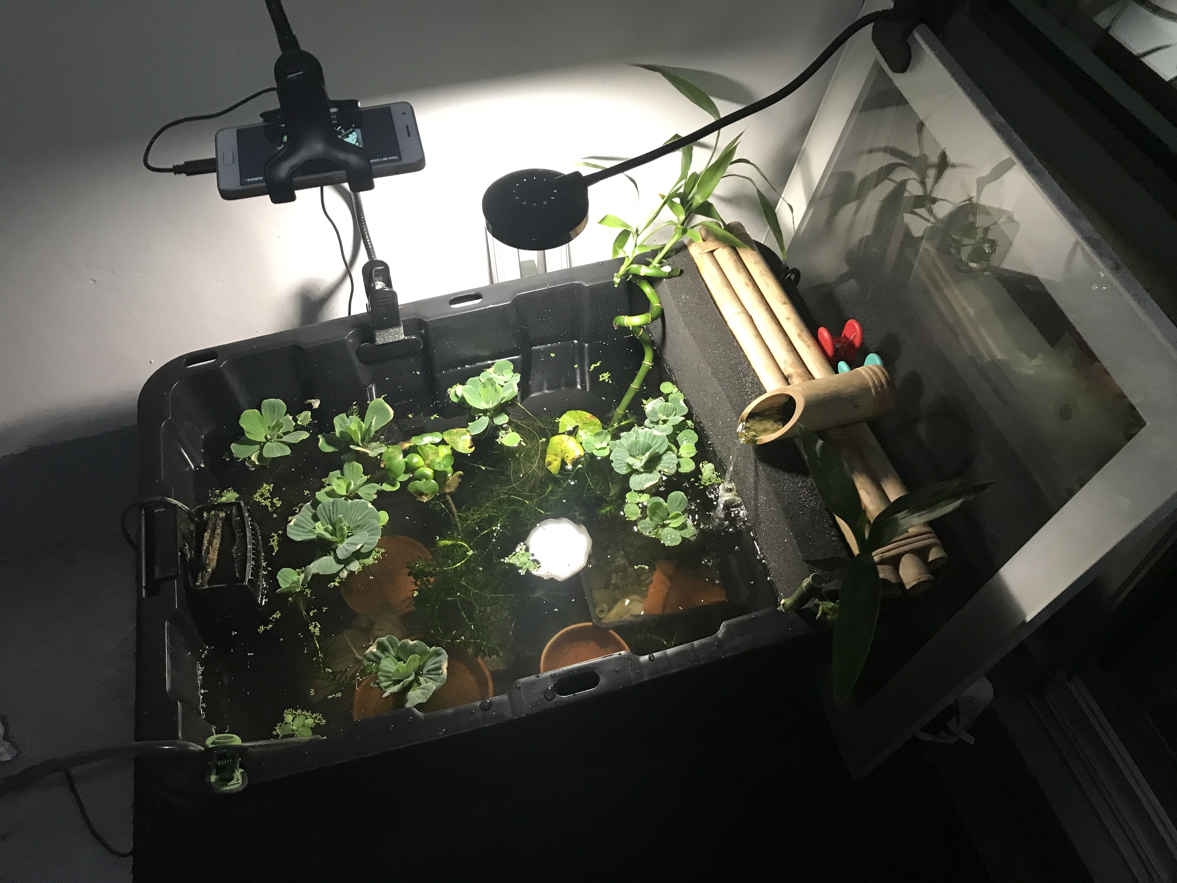 Picture of Plants