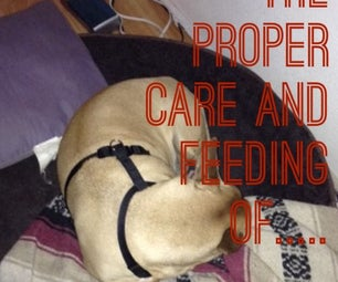 The Proper Care and Feeding Of...DOGS!!!
