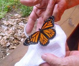 Monarch Butterfly Farm