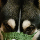 Gentle for Whiskers and Environmental Friendly Dog Muzzle