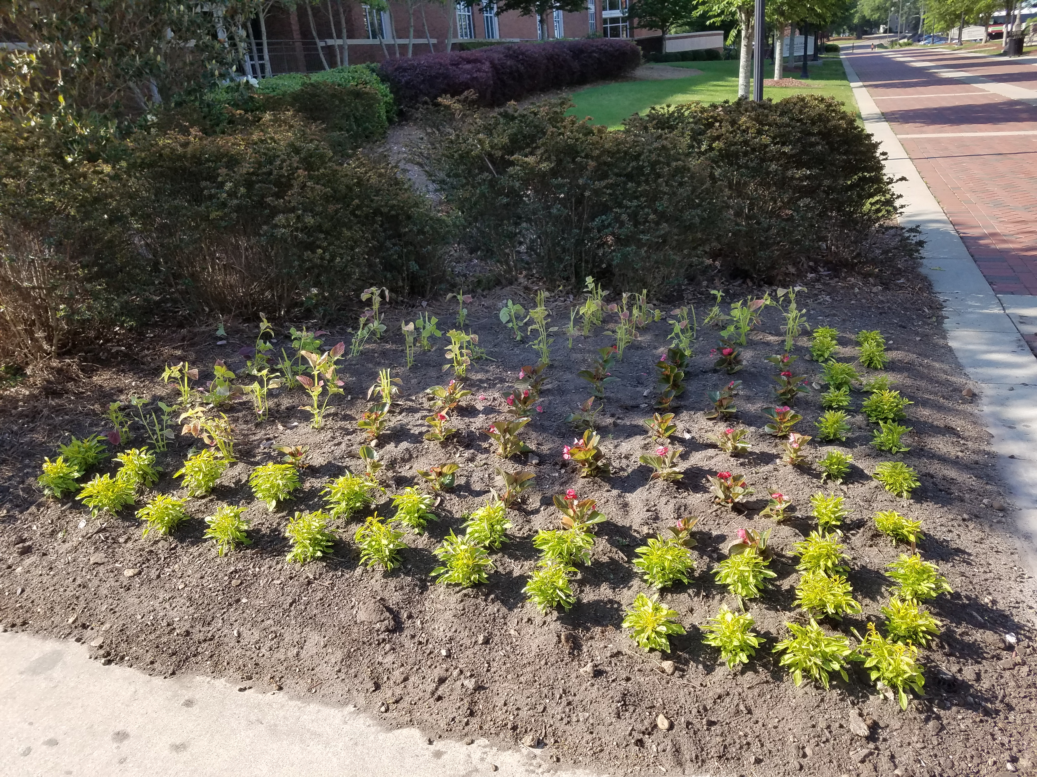 Picture of Planting Annual Flowers in Beds
