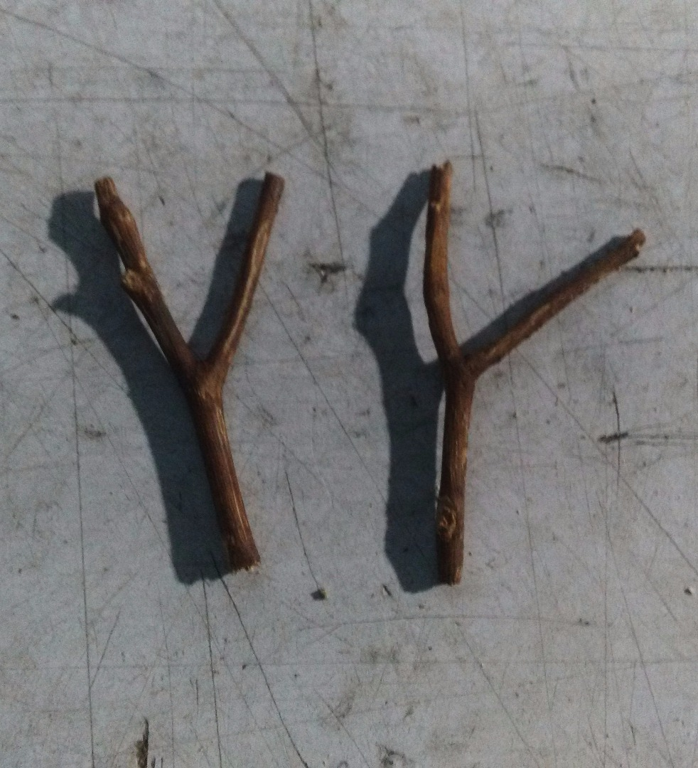 Picture of The Antlers