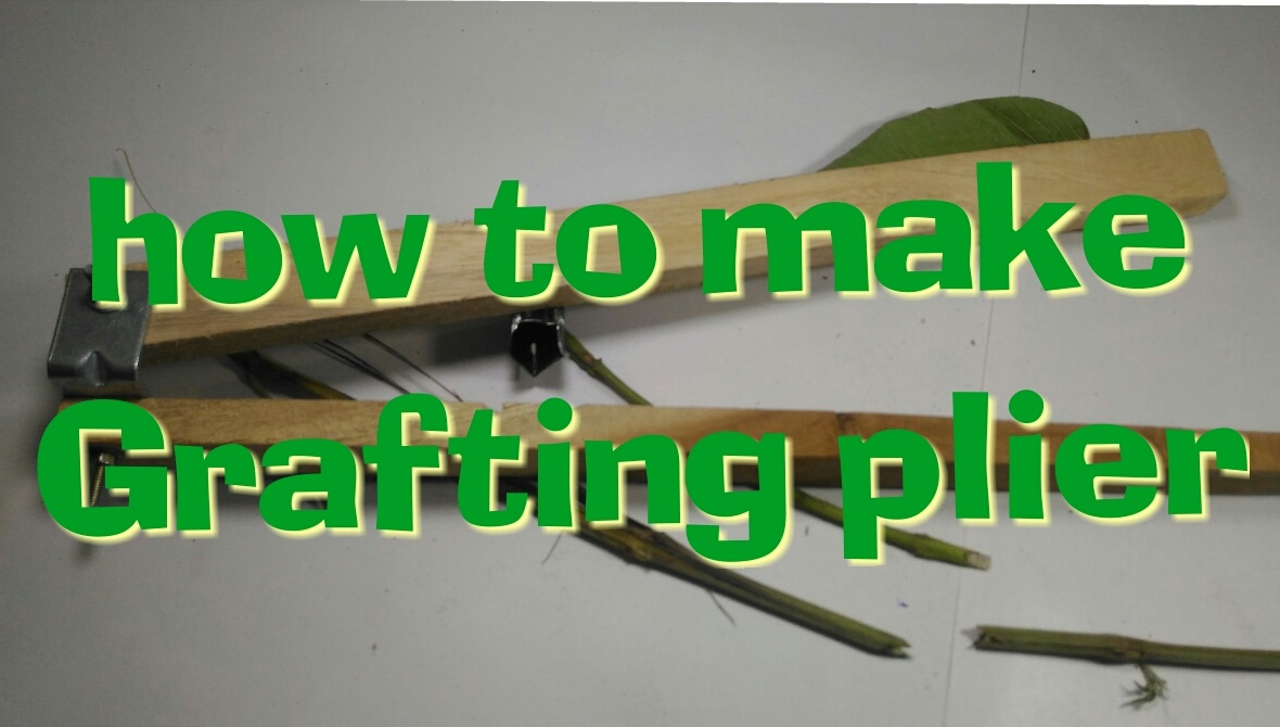 Picture of How to Make Grafting Plier