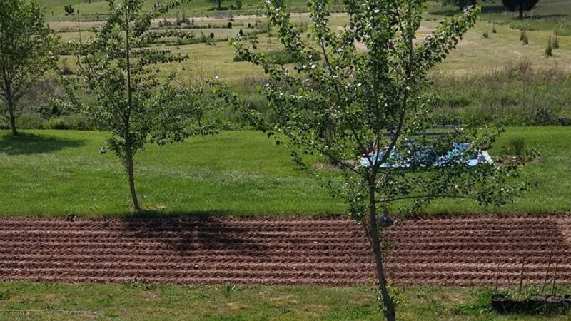 Picture of Fertilizing Your Corn