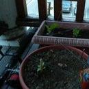 How to build a cheep garden