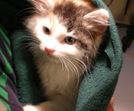 How to make a kitten sling
