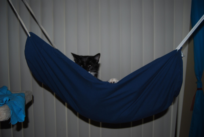 Picture of Cat Hammock
