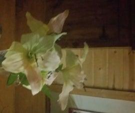 Glowflower