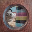 Guinea pig penthouse