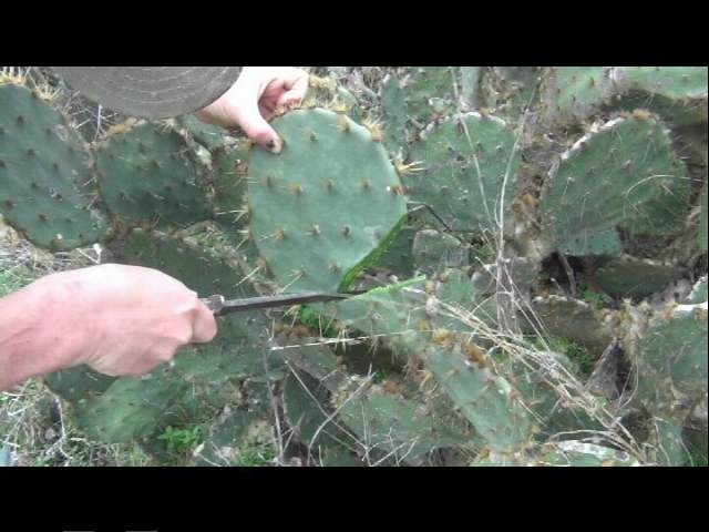 Picture of Find/Get Your Cactus