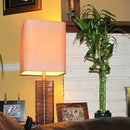 Turn a House Plant into a Touch Switch