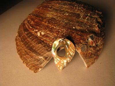 How to Polish Sea Shell
