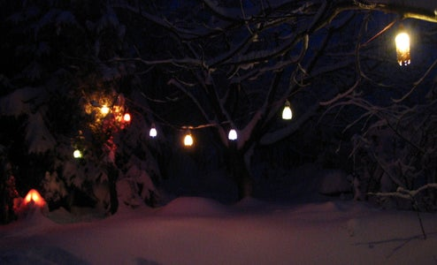The Garden Lights in the Winter Time