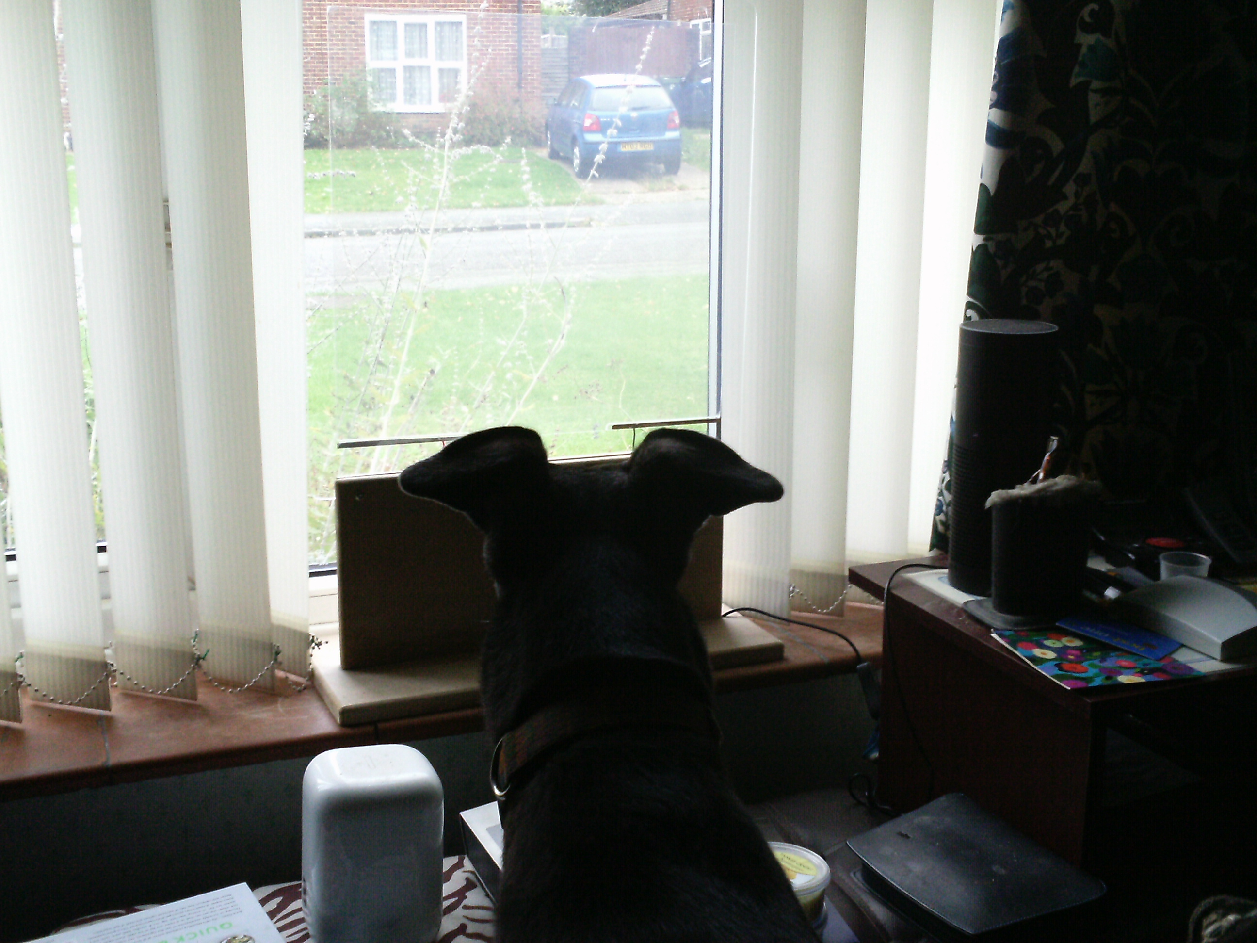 "Picture of In Place in the ""dog TV"" Window"