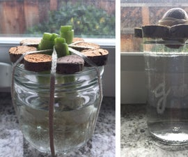 Sprouter: Grow Your Scraps!
