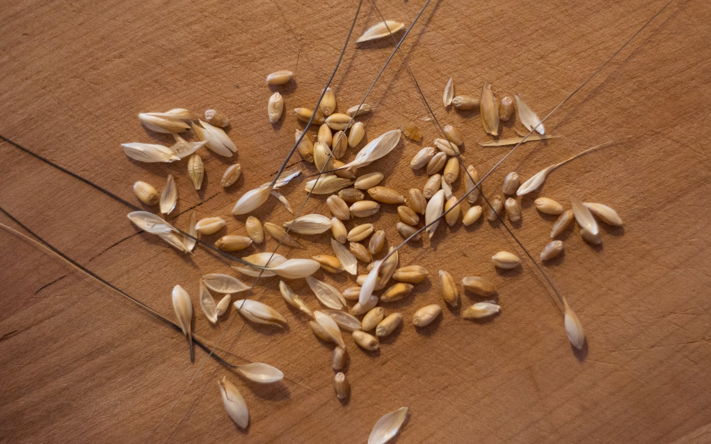 Anatomy of a Wheat Kernel