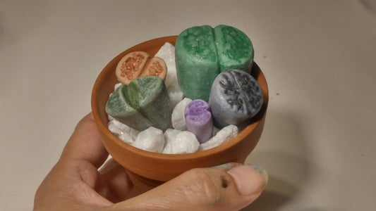 Faux Living Stones (Lithops)