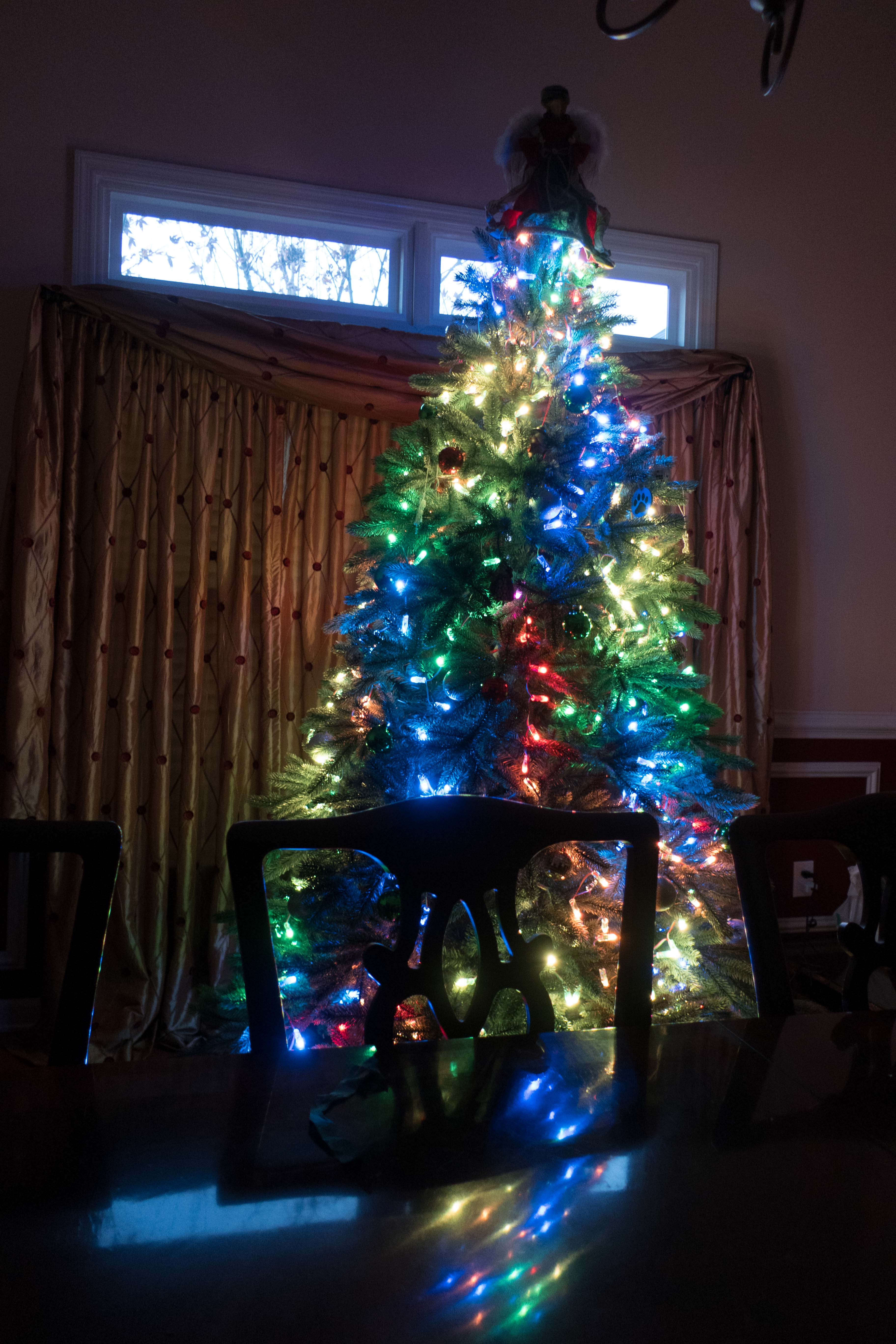 Picture of Light the Tree!