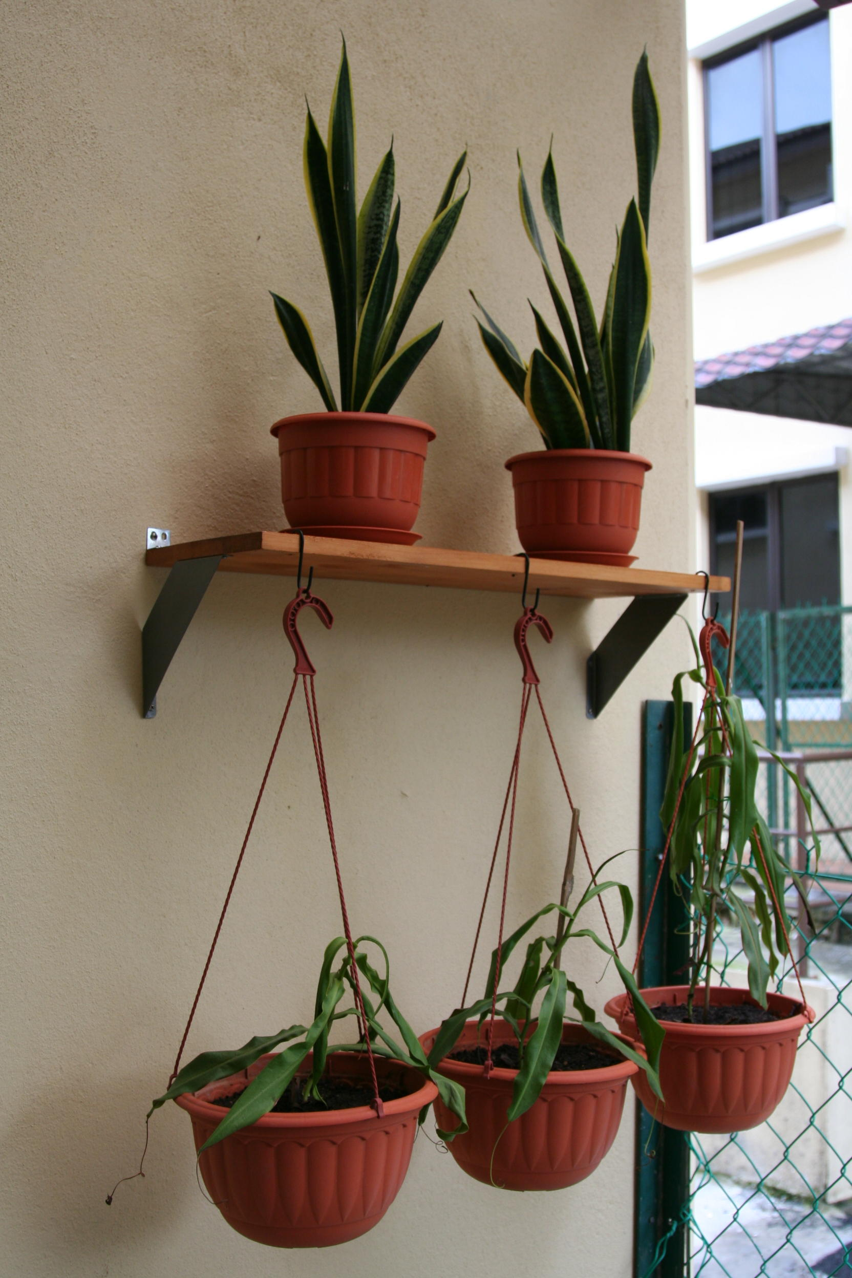 Picture of IKEA Fabian Shelf Turned Into a Cheap Hanging Garden Shelf
