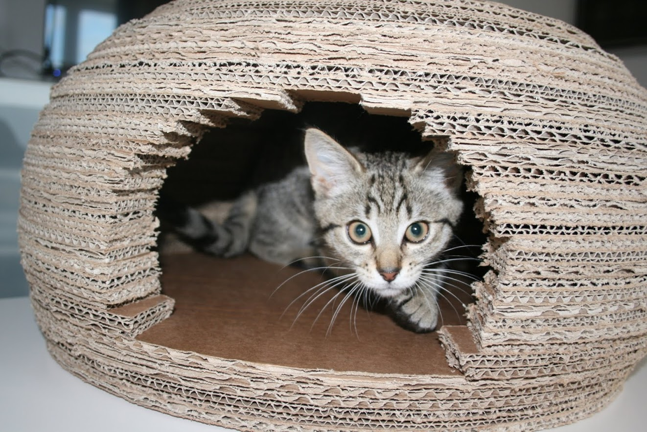 Picture of Cardboard Cat Igloo House
