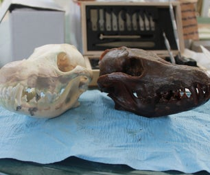 Cast a [Coyote] Skull